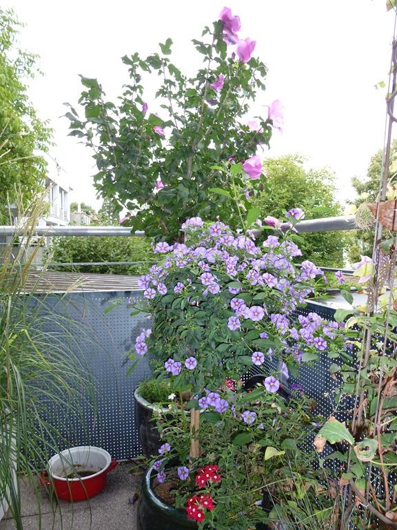 bew sserungssystem balkon balkon bew sserungssystem von gardena bew sserung mein balkon bew. Black Bedroom Furniture Sets. Home Design Ideas