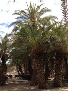 Palmenstrand von Vai